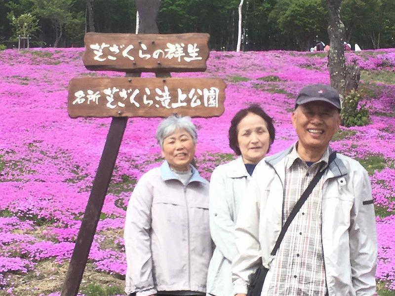 北海道観光個人タクシー 芝桜