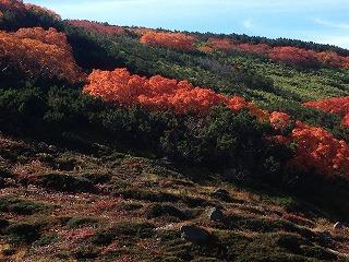 北海道観光タクシー 旭岳