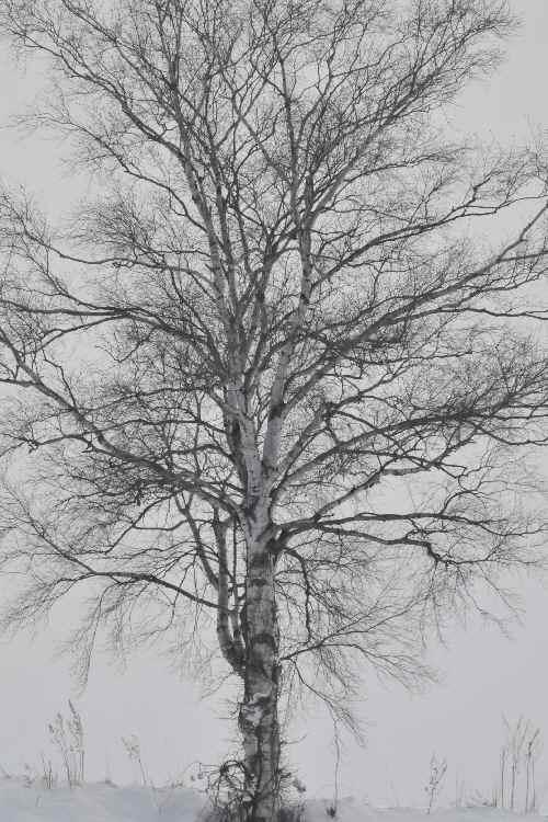 冬の風景 小野寺タクシー