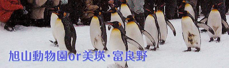 旭山動物園 北海道・札幌観光タクシー